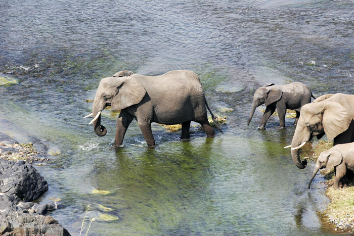 Elephants on the move at Venetia Limpopo Nature Reserve