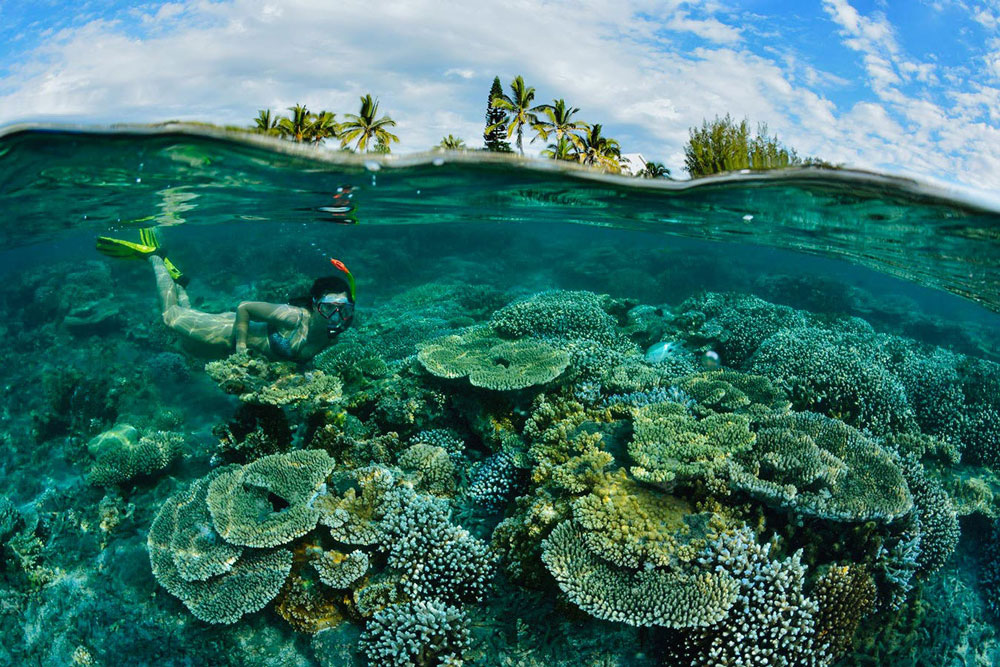 Coral Reefs at Reunion Island France